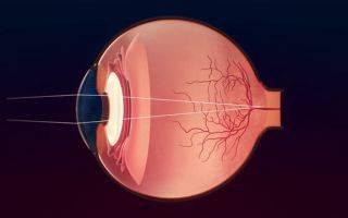 Сколько кадров в секунду воспринимает человеческий мозг. сколько кадров в секунду видит человек. строение глаза и интересные факты