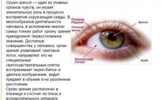 Ветви тройничного нерва: глазной и верхнечелюстной нервы