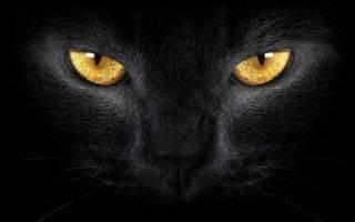 Глазной тик: почему дёргается глаз