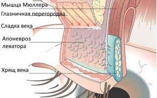Отечность век над глазами: причины, симптомы, лечение и профилактика