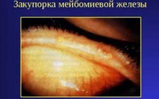 Мейбомиевы железы и их функции