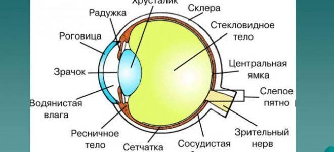 Как расслабить глаза? комплекс упражнений для глаз. капли для расслабления мышц глаз
