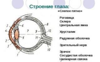 Что называют слепым пятном глазного яблока. тест на выявление слепого пятна в глазу