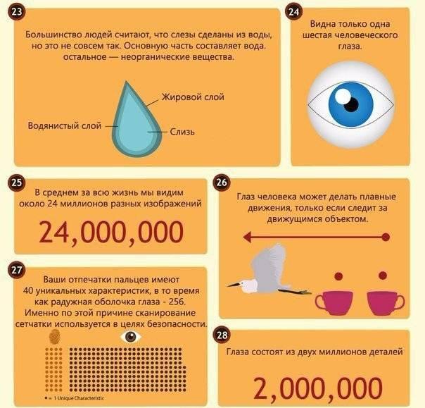 20 невероятных фактов о глазах и зрении  | fresher - лучшее из рунета за день