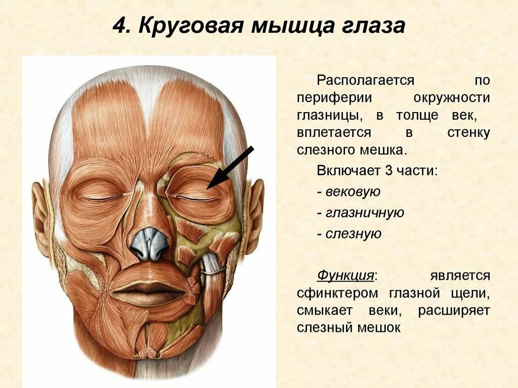 Миокимия: глаз постоянно дергается. о чем стоит задуматься?
