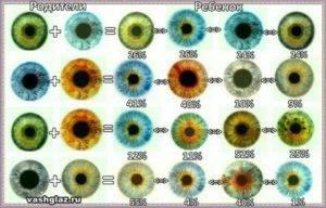 Можно ли определить цвет глаз ребенка по глазам родителей?