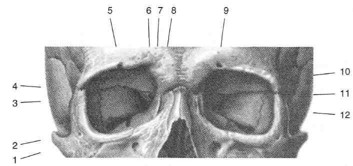 Анатомия ответы на экзамен. предмет и содержание анатомии. ее место в ряду биологических дисциплин. значение для изучения, клинических дисциплин и для медицинской практики
