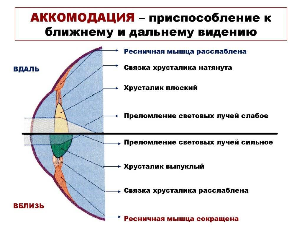 Что такое аккомодация глаза? по каким причинам может возникнуть нарушение?