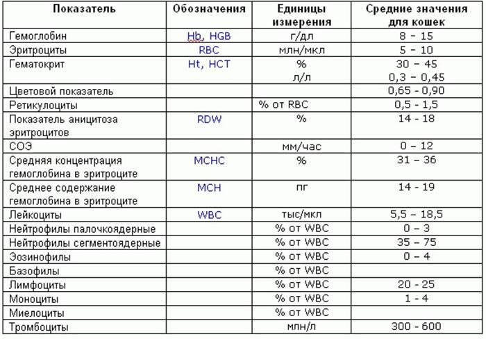 Офтальмоскопия глазного дна: описание, прямая и не прямая, методика проведения и расшифровка результатов