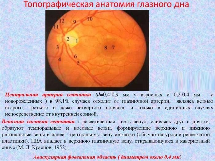 Офтальмоскопия глазного дна - что это, как проводят, расшифровка результатов