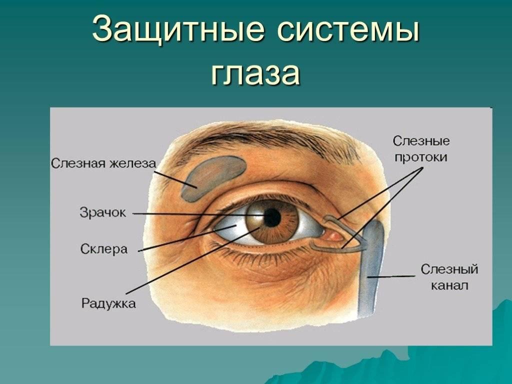 """Белая точка на глазу: причины, виды, лечение - """"здоровое око"""""""