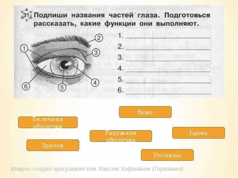 Строение глаза человека - основные отделы глаза и их функции, диагностика заболеваний глаз