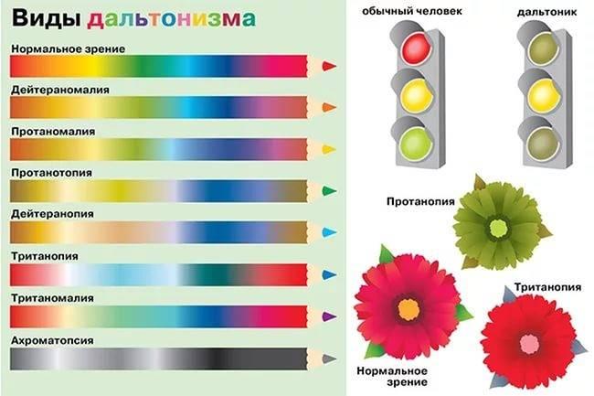 Различается ли цветовосприятие у мужчин и женщин?