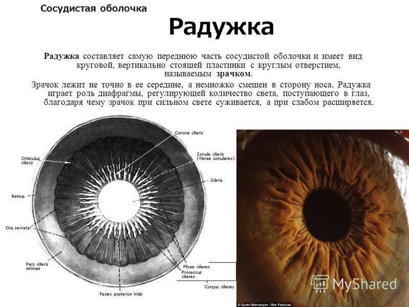 Радужная оболочка глаза функции