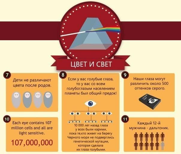 Узнаем интересные факты о глазах