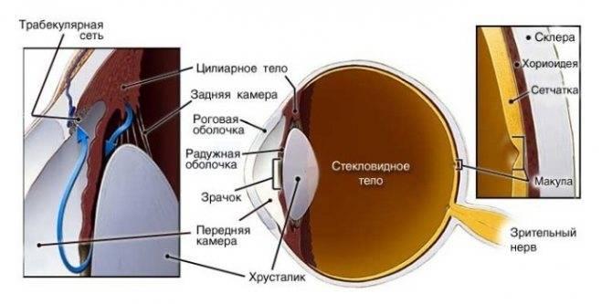 Норма внутриглазного давления по возрасту и полу в таблице
