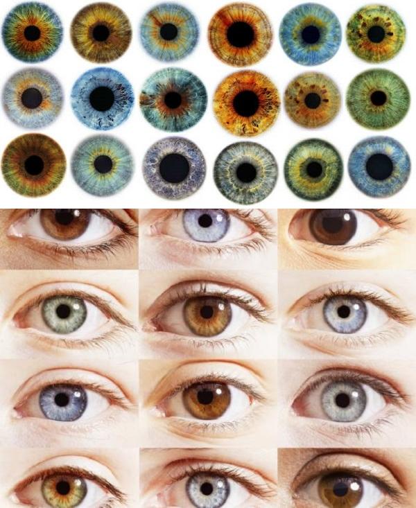 Что значит цвет глаз человека (зеленый, голубой, серый, карий и другие)