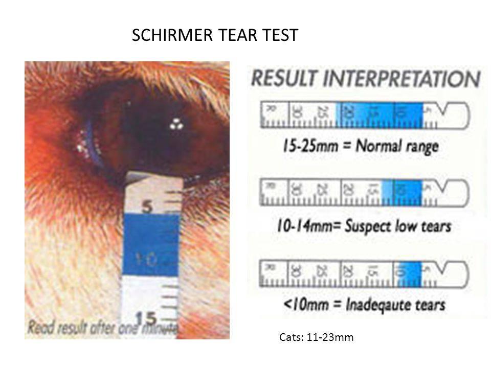 Как узнать результат анализа на коронавирус: где посмотреть, через сколько дней приходит тест