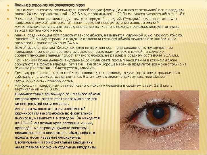 Строение глаза человека. глазное яблоко и вспомогательный аппарат зрения