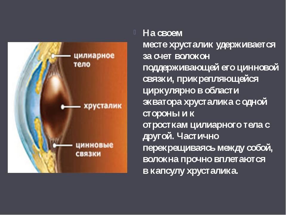 """Факосклероз: причины, симптомы и методы лечения - """"здоровое око"""""""