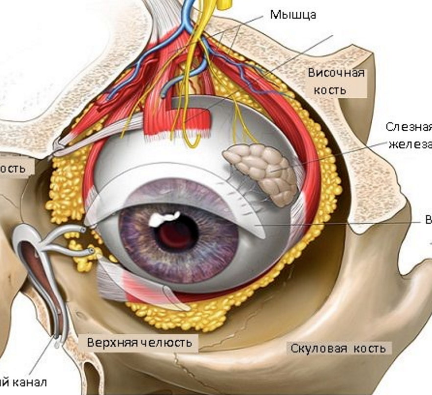 Болит под глазом при нажатии, причины почему больно нажимать под нижним веком