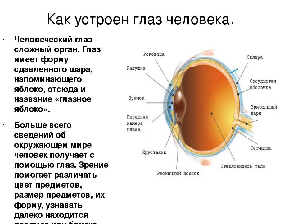 Сколько кадров в секунду видит человек. строение глаза и интересные факты