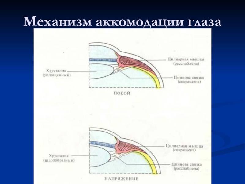 Аккомодация глаза: как происходит, виды, симптомы нарушений