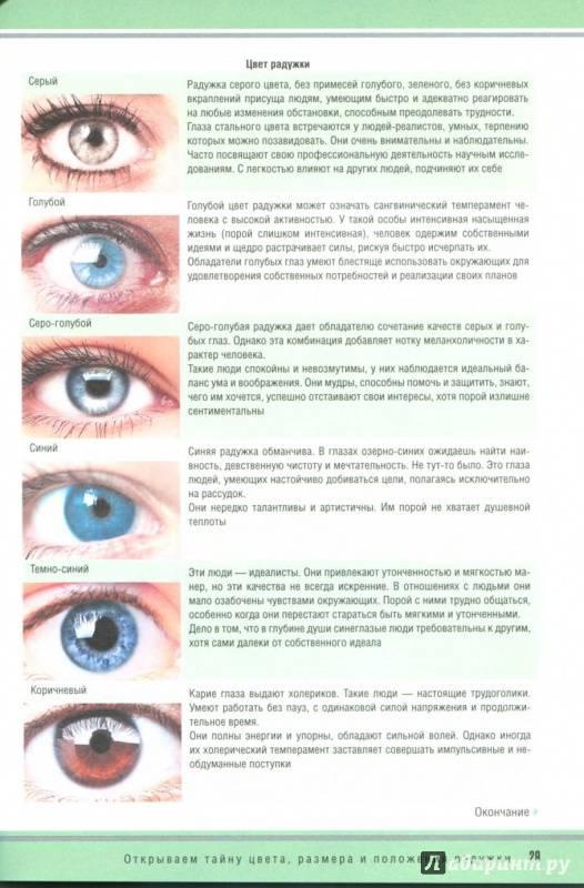 Основные типы глаз человека