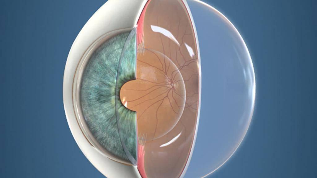 Строение хрусталика глаза человека: особенности и функциональность