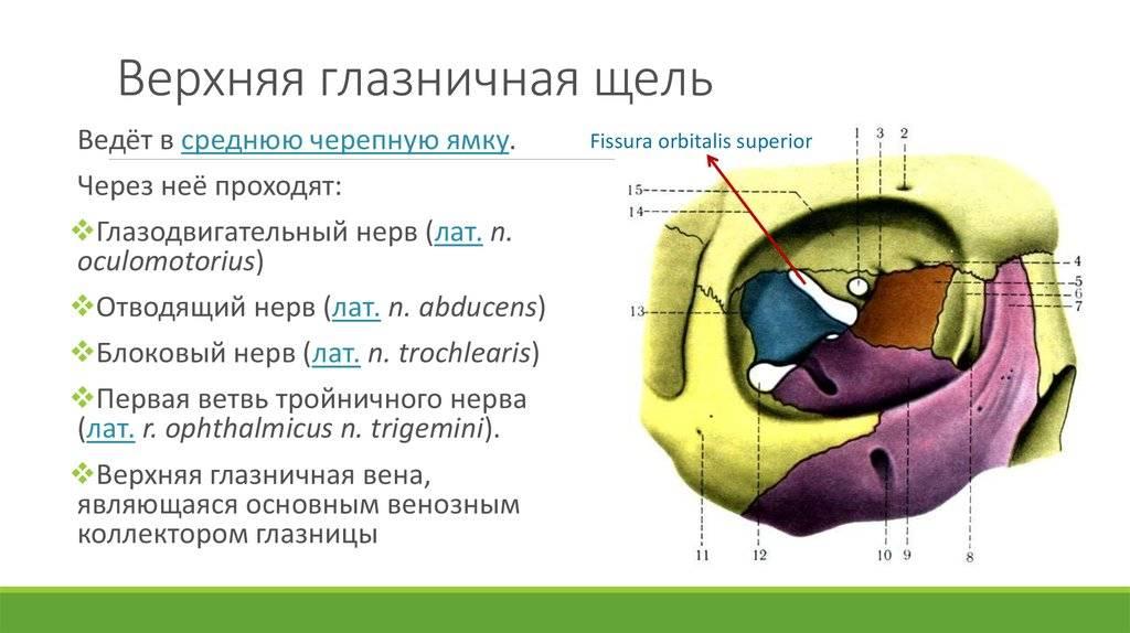 Место выхода из полости черепа: верхняя глазничная щель (из средней черепной ямы проходит в глазницу)