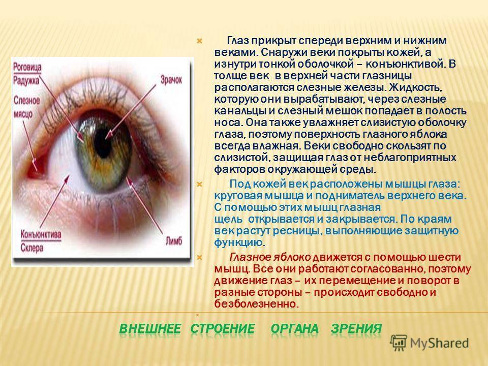 Роговица глаза   лечение глаз