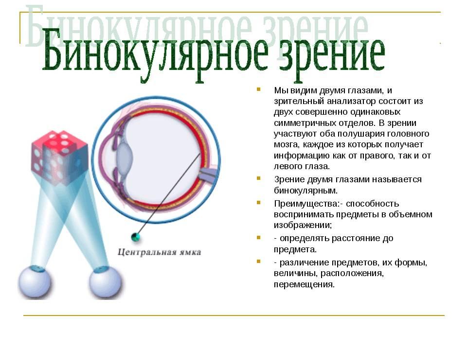 Что такое бинокулярное зрение, возможные нарушения oculistic.ru что такое бинокулярное зрение, возможные нарушения