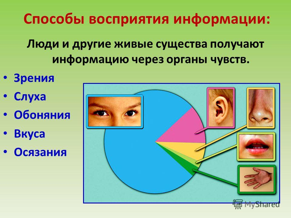 Сколько информации человек получает через зрение