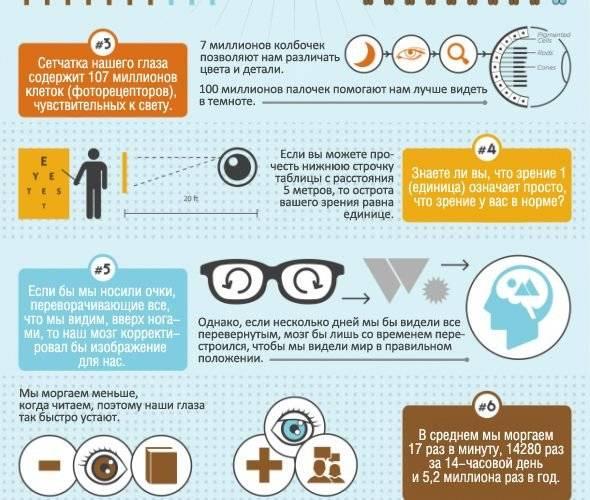 Интересные факты о зрительном анализаторе человека. узнаем интересные факты о глазах. наши удивительные глаза