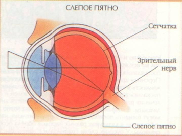 Появилось слепое пятно в поле зрения - лечение глаз