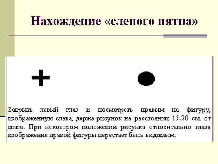 Слои сетчатки глаза и их функции - sammedic.ru