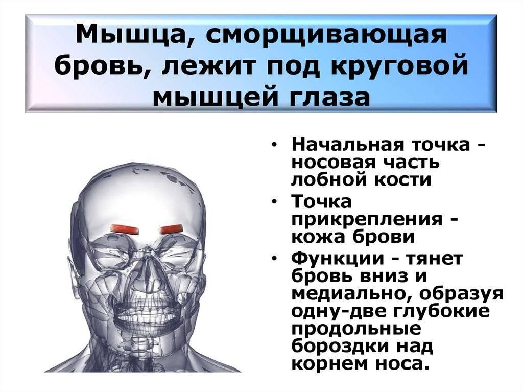 """Мышцы глаза: строение, функции, заболевания - """"здоровое око"""""""