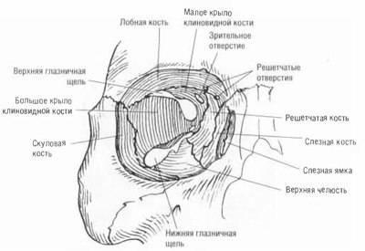 Анатомия глазницы – полость, состав и особенности сообщения с черепом