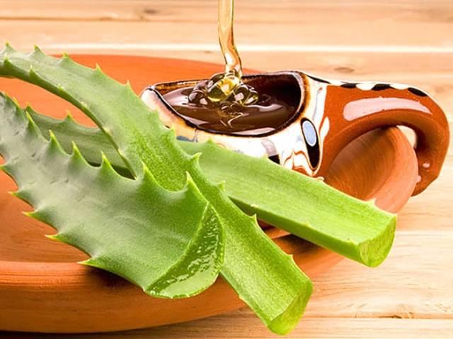 Лечебные свойства алоэ и рецепты: что можно делать с листами и соком цветка, приготовление средств народной медицины в домашних условиях, польза и вред растения