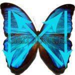 Метод бабочки по Норбекову