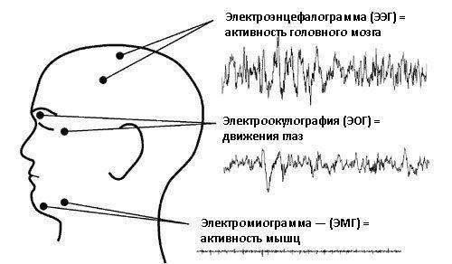 Активность мозга, глаз и мышц