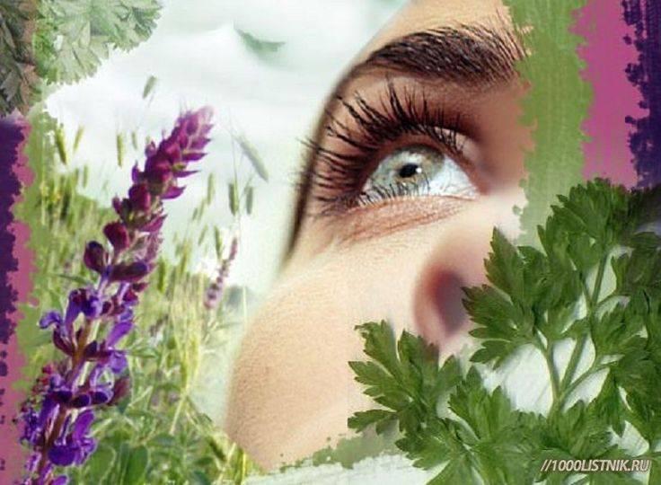 Травы для глаз, улучшения зрения: очанка, алоэ при миопии