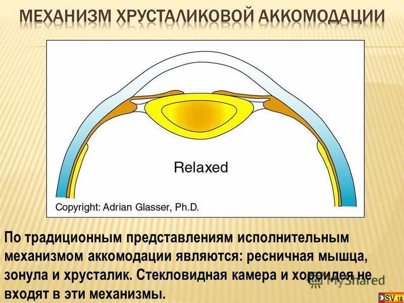Что такое аккомодация глаза человека, причины нарушений