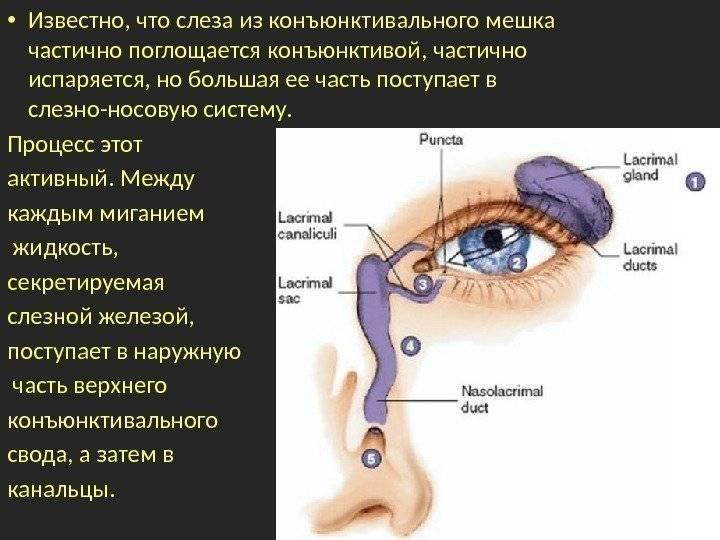 Конъюктивальный мешок глаза: что это такое, где находится эта полость?