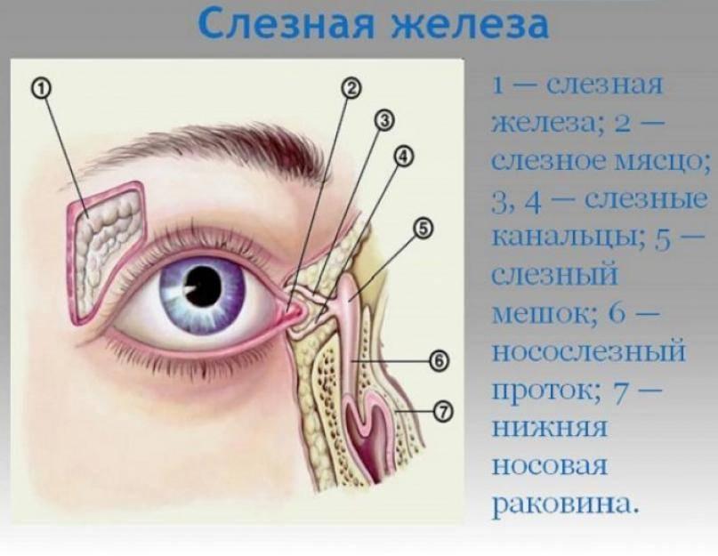 Слезятся глаза и насморк, что делать, если слезятся глаза при простуде?