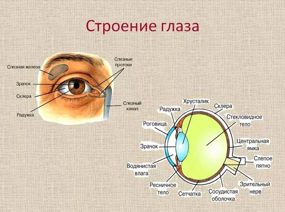 Нарост на глазном яблоке: причины и симптомы образования, методы лечение, фото