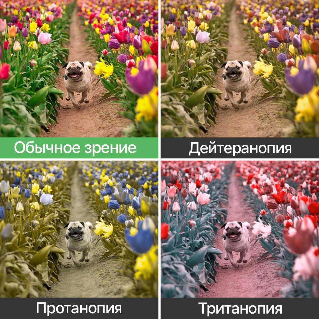 Обратный тест на дальтонизм: только дальтоники могут увидеть, что написано на картинке