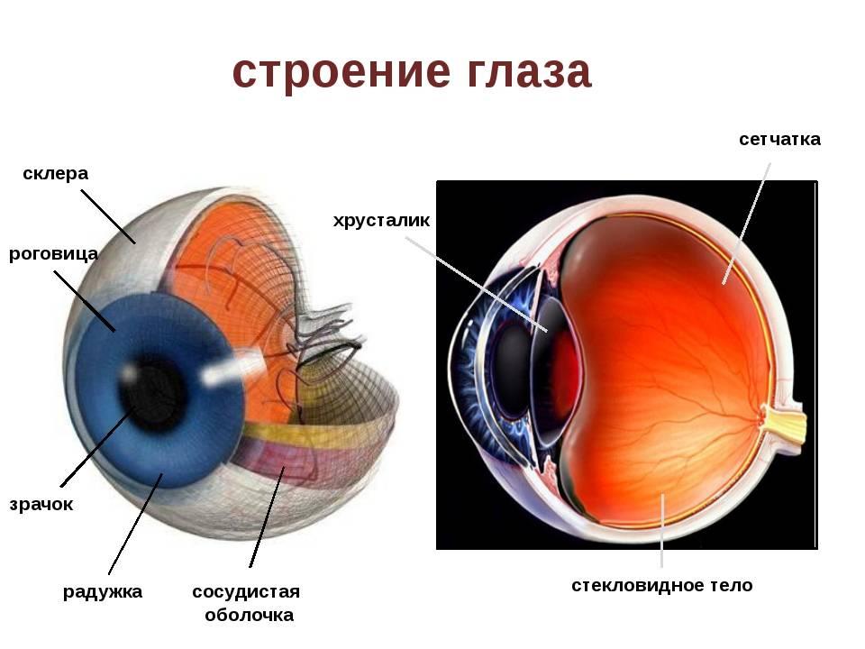 """Хрусталик глаза - строение и функции, диагностика и заболевания - сайт """"московская офтальмология"""""""