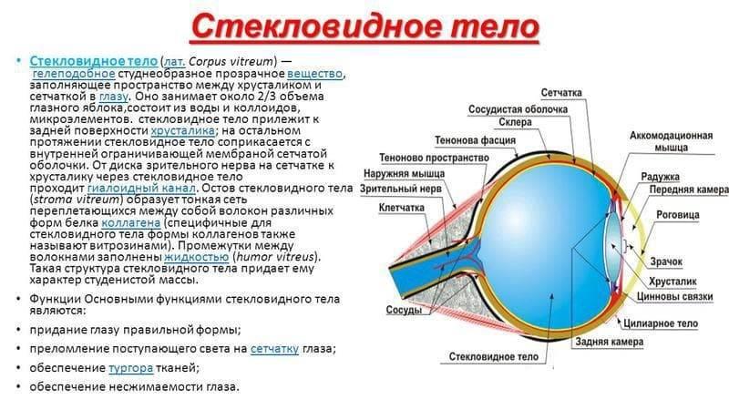 Зрачок глаза и его нарушения