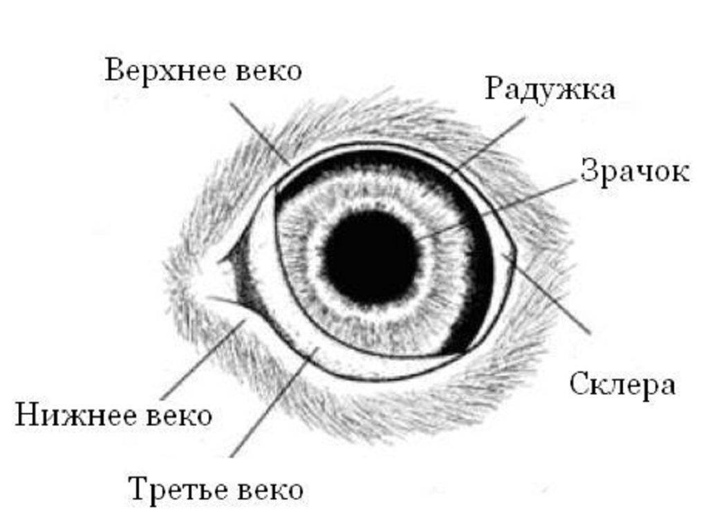 Красное веко у ребенка: причины и особенности лечения oculistic.ru красное веко у ребенка: причины и особенности лечения
